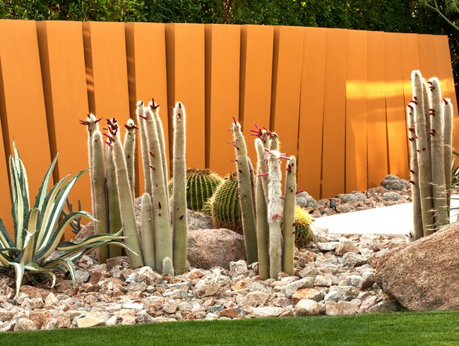 "Cleistocactus Strausii (silver Torch), Echinocactus, Grusonii (golden Barrel Cactus) ""Dream Team's"" Portland Garden Garden Design Calimesa, CA"