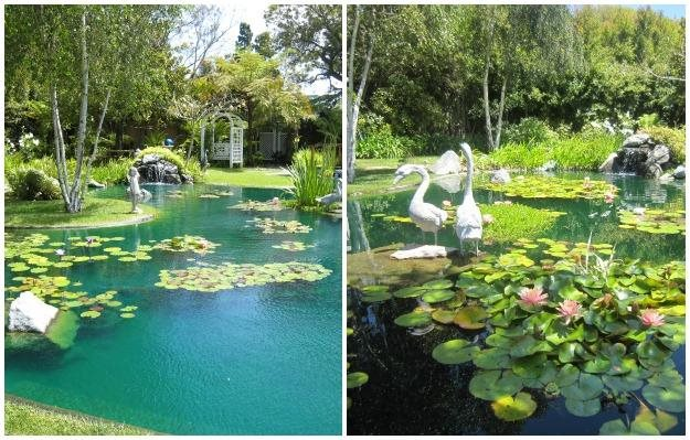 Fish And Flora Pond