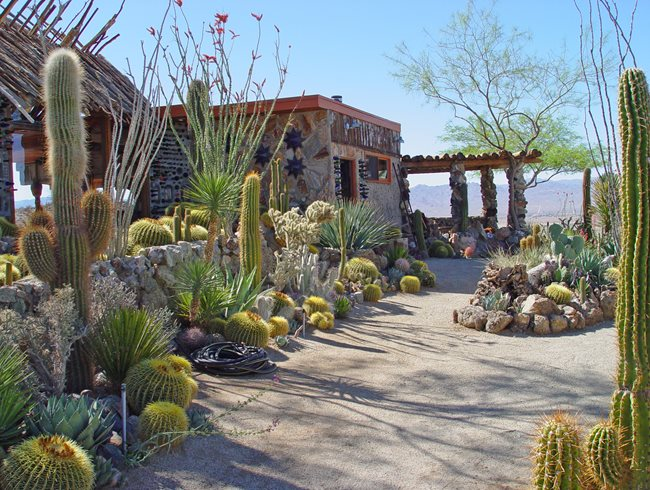 """Dream Team's"" Portland Garden Mojave Rock Ranch Joshua Tree, CA"