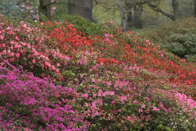 grow your own rhododendrons garden design - Garden Design Knaresborough