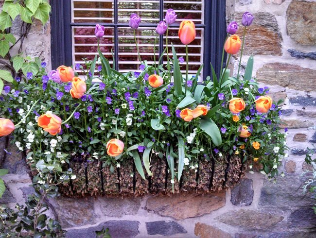 "Window Baskets ""Dream Team's"" Portland Garden Garden Design Calimesa, CA"