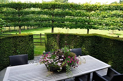 Espalier trees for every garden garden design for Horizontal garden screening