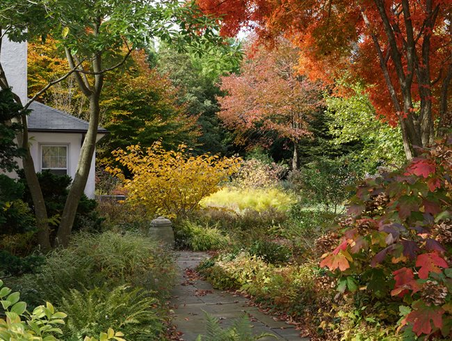 Autumn Garden, Fall Colors Rick Darke LLC Landenberg, PA