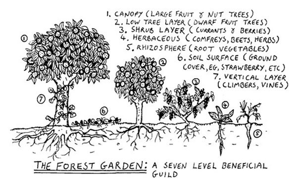 Beacon Food Forest  Garden Design Calimesa, CA