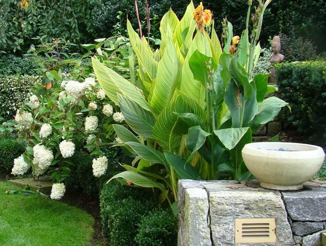 Bengal Tiger Canna Lily, Striped Canna Lily Johnsen Landscapes & Pools Mount Kisco, NY