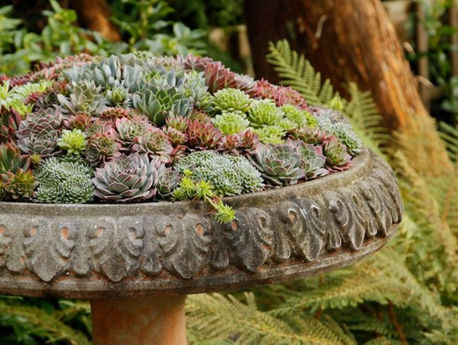 birdbath container sempervivum container pot incorporated vancouver bc