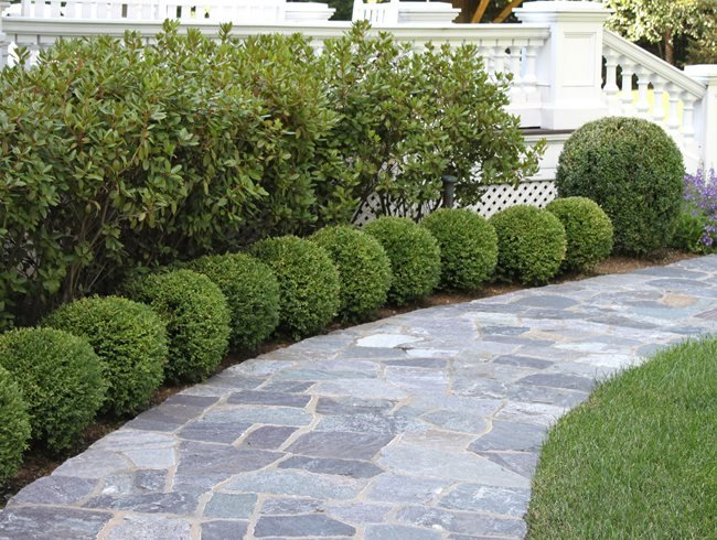 Boxwood Edging, Boxwood Globes Johnsen Landscapes & Pools Mount Kisco, NY