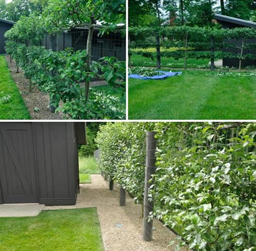 Espalier Trees For Every Garden Garden Design