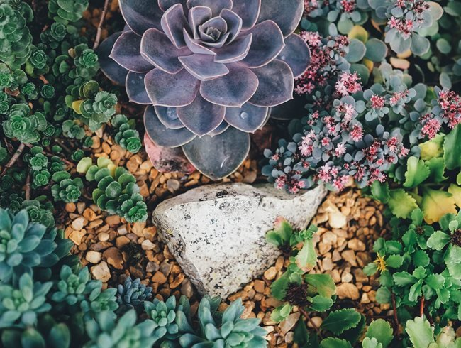 How to Plant Succulents Growing Tips Garden Design