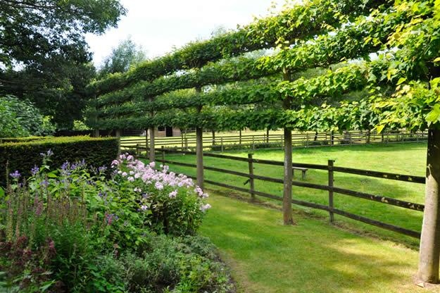 horizontal espalier - Garden Design Trees