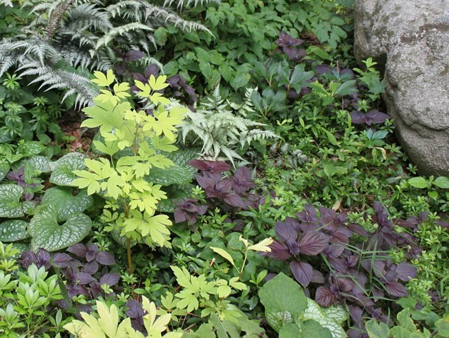 Foliage Garden, Foliage Plants Johnsen Landscapes & Pools Mount Kisco, NY