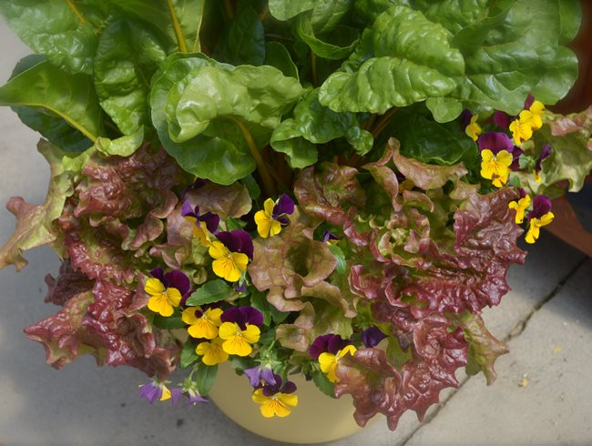 herbs veggies container gardenfix toronto on - Garden Design Trends 2016