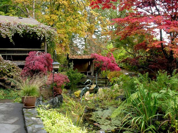 Inner Garden Autumn Robin Hopper (Homeowner) Metchosin, British Columbia
