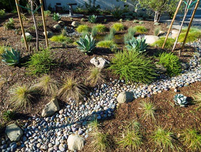 Lawn Free Garden, Succulent Garden Theodore Payne Foundation Sun Valley, CA