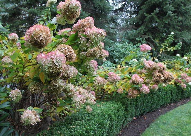 Ideas For An Alluring Autumn Garden | Garden Design