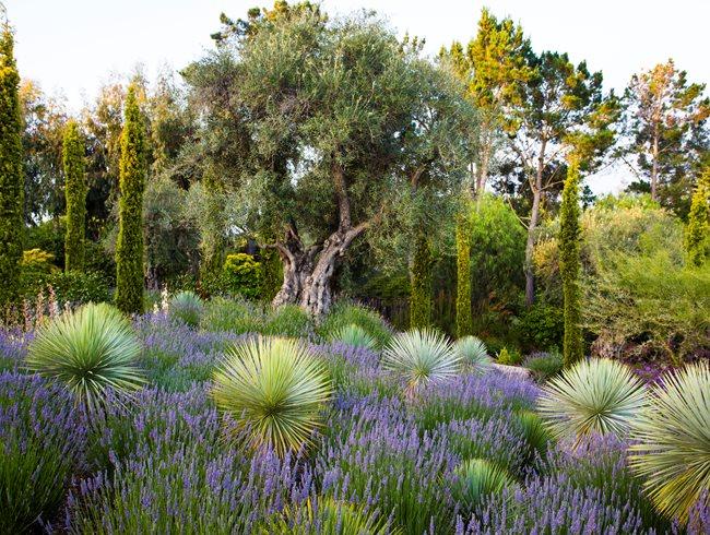 Olive Garden Green Bay