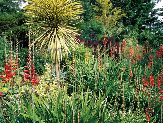 mediterranean plants to grow in your garden