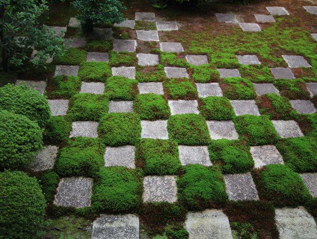 Using moss as a design element garden design for Checkerboard garden designs