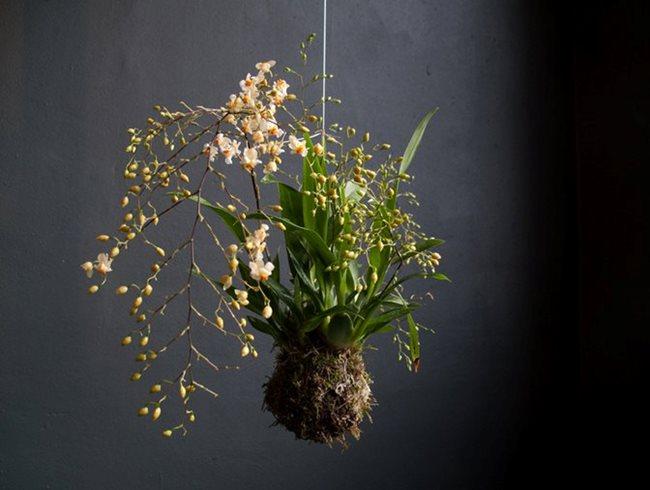 Orchid Garden Design Calimesa, CA