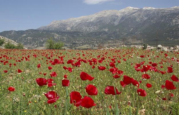 The Remembrance Poppy Garden Design