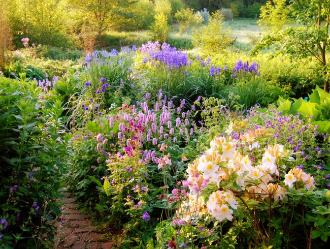 Lovely Perennial Garden, Perennial Design MyGardenSchool London, UK