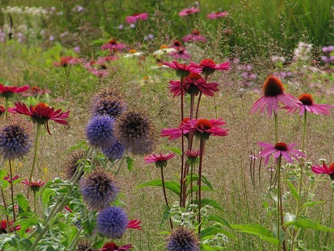 Marvelous Perennial Planting, Perennial Desing MyGardenSchool London, UK