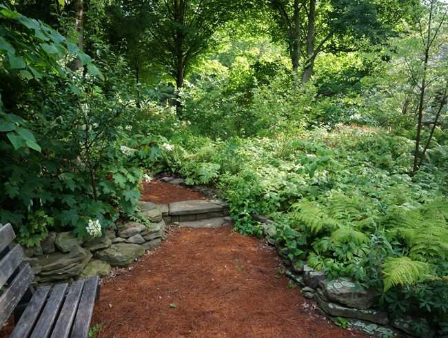 Pine Needle Path, Oak Bench Rick Darke LLC Landenberg, PA