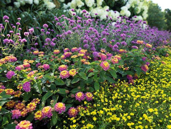 Pollinator Garden Design, Smallscape Pollinator Garden Proven Winners Sycamore, IL