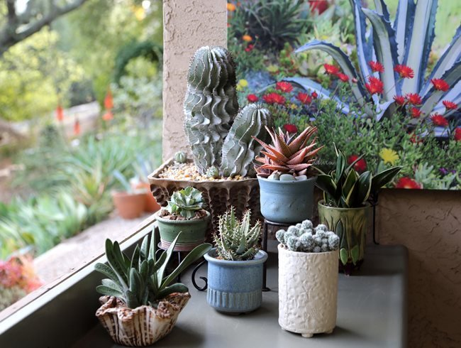 Succulentes en pot, Collection succulente Design de jardin Calimesa, CA