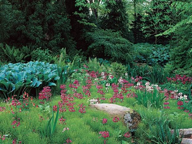 How to Design a Rain Garden Garden Design