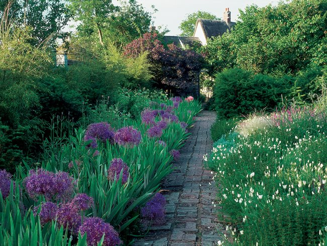English Garden Designs british garden design Purple Alliums White California Poppies Garden Design Calimesa Ca