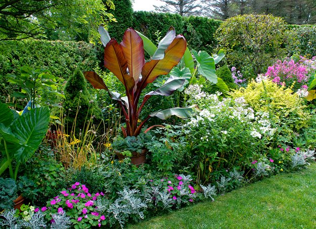 Garden Gone Berserk Garden Design