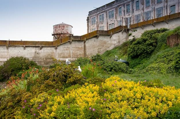 Make an Escape to the Gardens of Alcatraz | Garden Design