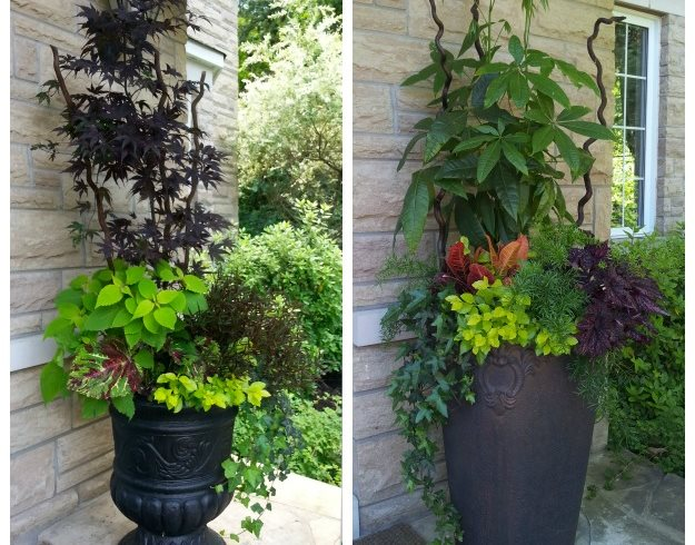 Side By Side Planters Of Color And Drama Candace Mallette Landscape & Garden Design Ottawa, ON