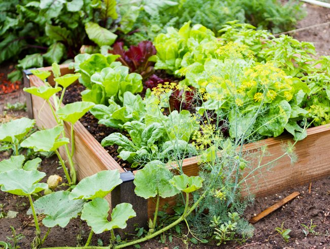 Vegetable Garden Idea Small Raised Bed, Vegetable Garden Garden Design Calimesa, CA