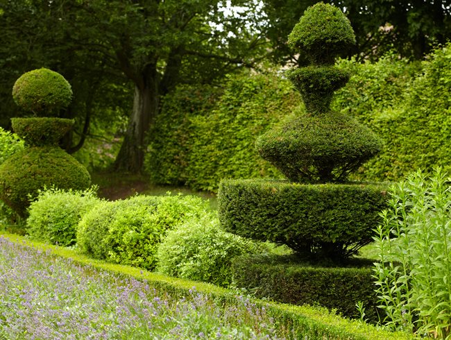 Topiary shape shifters garden design for Topiary garden designs