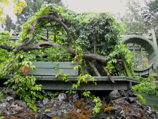 Virginia Creeper, Garden Bench Garden Design Calimesa, CA