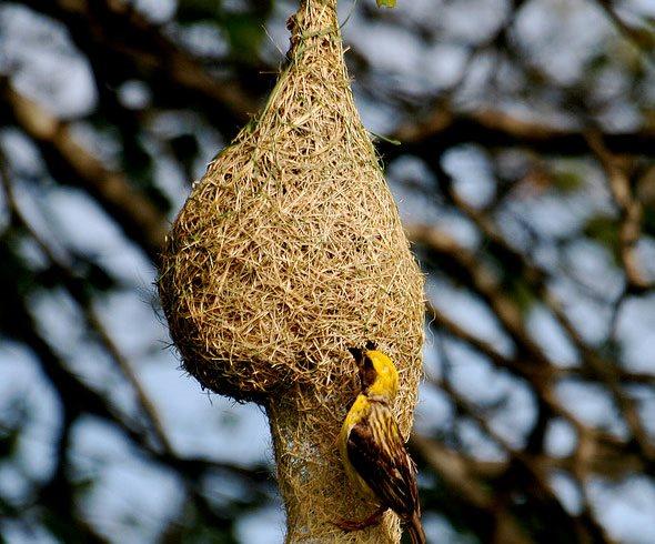 Textile In The Trees Weaver Bird Nests Garden Design