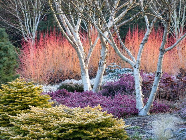 Winter Plants, Winter Garden