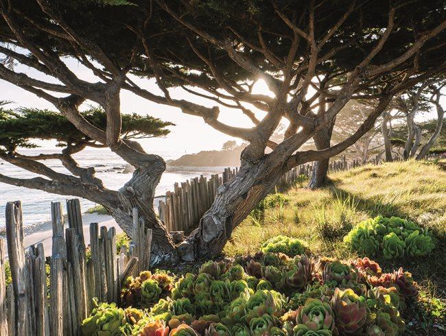 Coastal Garden, Succulent Garden Succulent And Cacti Pictures Garden Design  Calimesa, CA