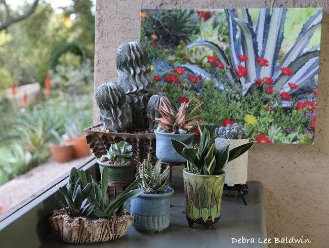 How to care for succulents garden design - Succulent container gardens debra lee baldwin ...