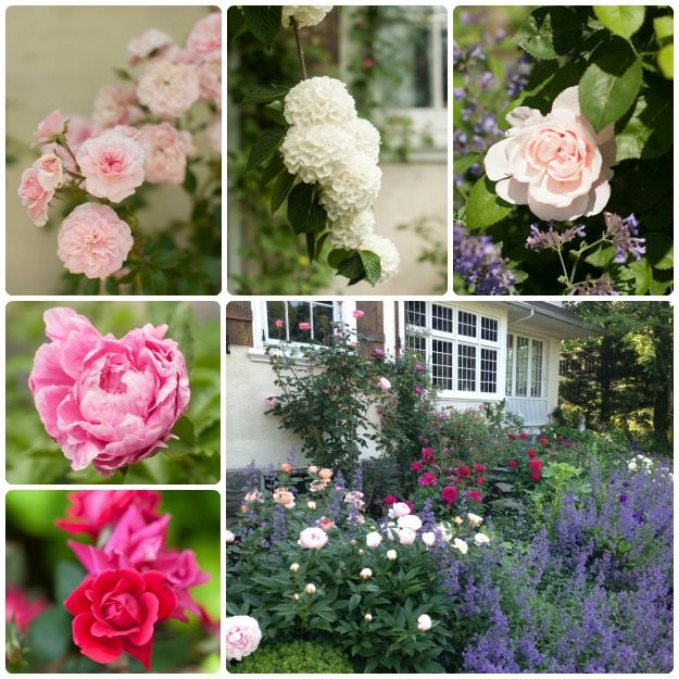 My Garden An Affinity for Roses Garden Design