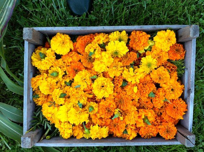 diy marigold garlands
