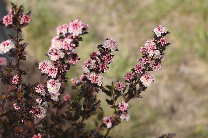 Flowering Shrubs That Bring Joy Through The Fall Season