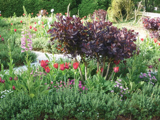 Garden Design With Shrubs : Shrubs that bring joy through the fall season garden design