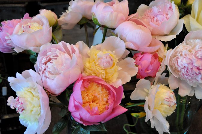 peonies and garden roses gallery garden design - Garden Rose And Peony