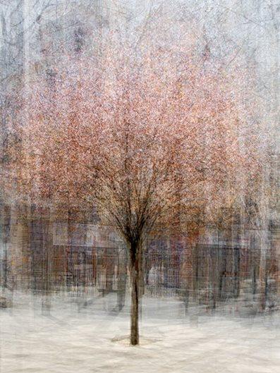 Pep Ventosa S Trees In The Round Gallery Garden Design