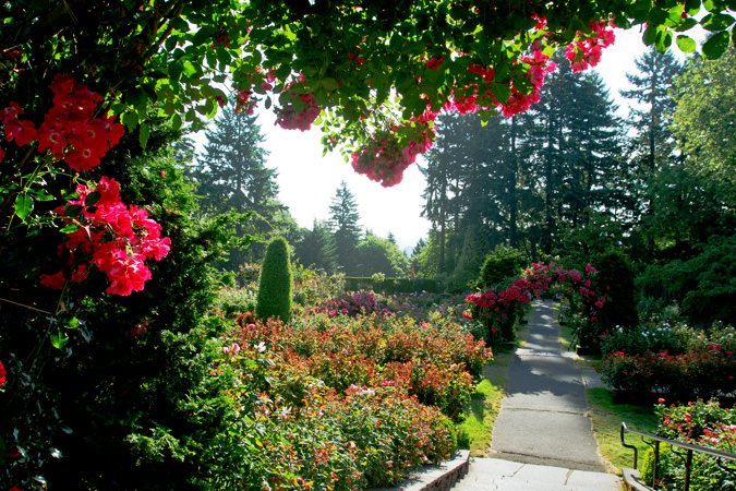 Portlandu0027s International Rose Test Garden Portland Parks U0026 Recreation  Portland, ...