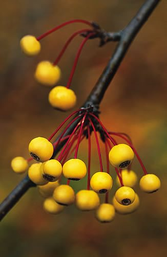 Plants With Berries Top Trees Shrubs With Colorful Berries