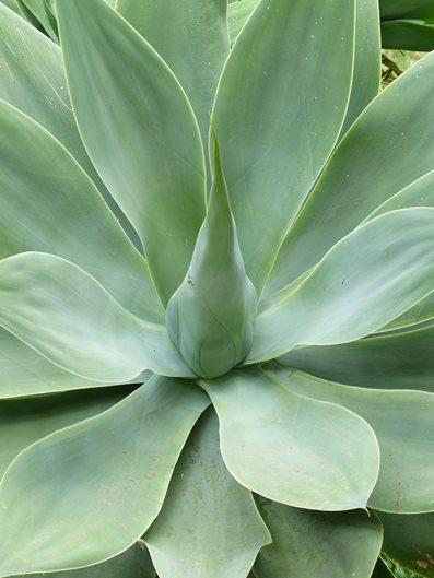 Types Of Succulents 15 Of The Best Succulent Plants